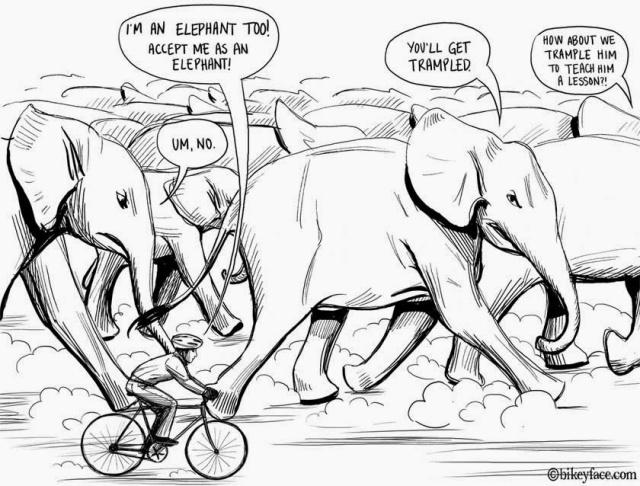 Bikeyface+-+Elephants-1