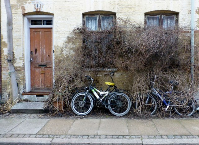 Front yard neglect - Copenhagen-style.