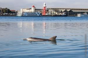 dolphin Port River